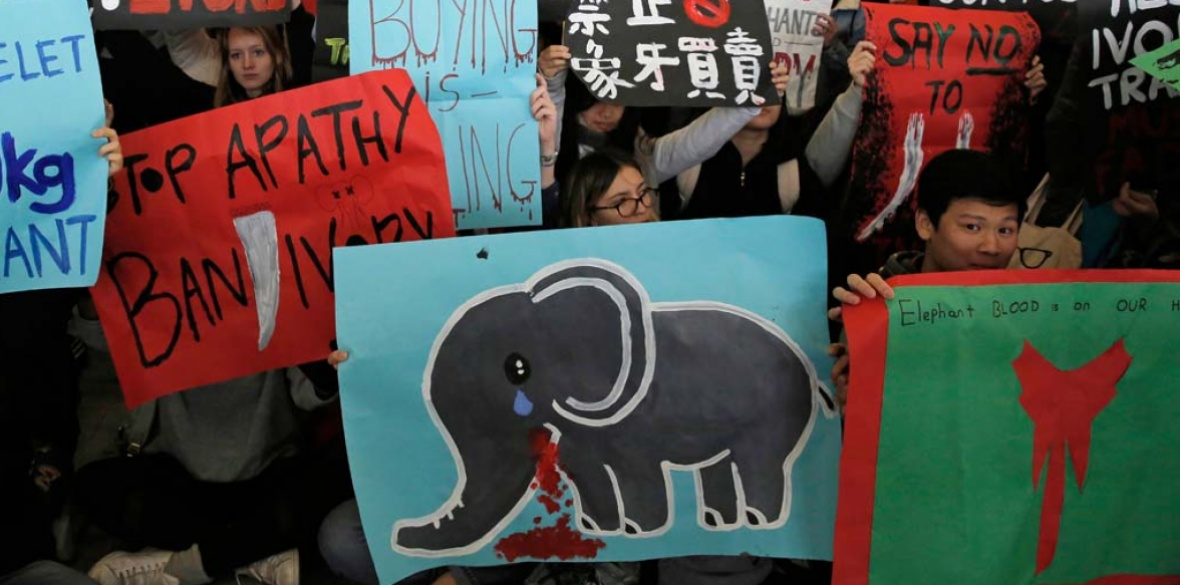 Pro-elephant demonstrators in Hong Kong