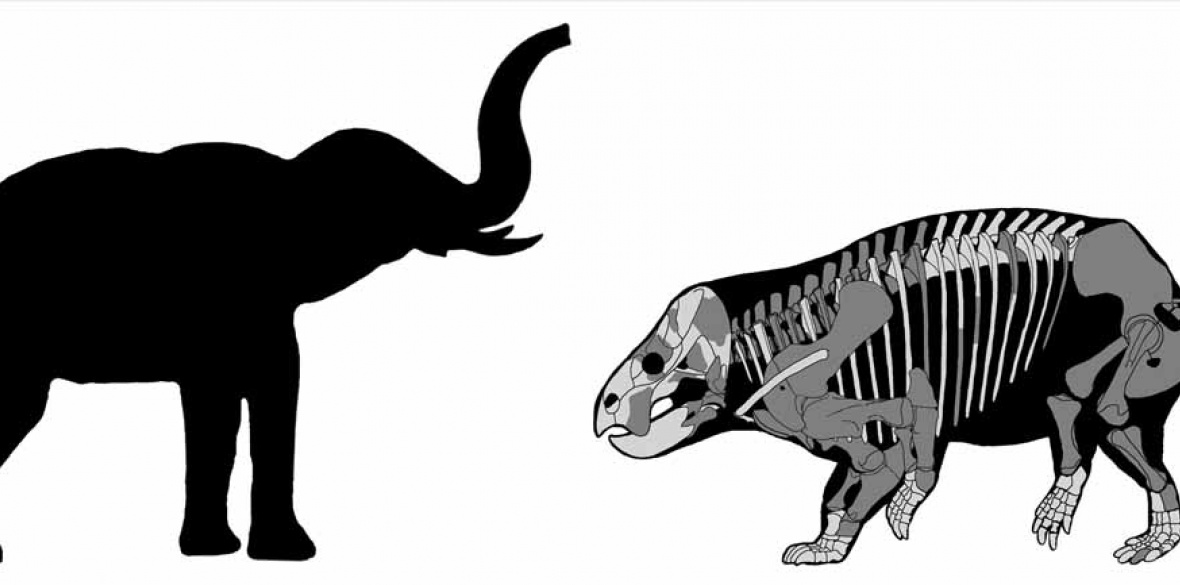 An elephant compared to recently discovered mammal-like reptile Lisowicia