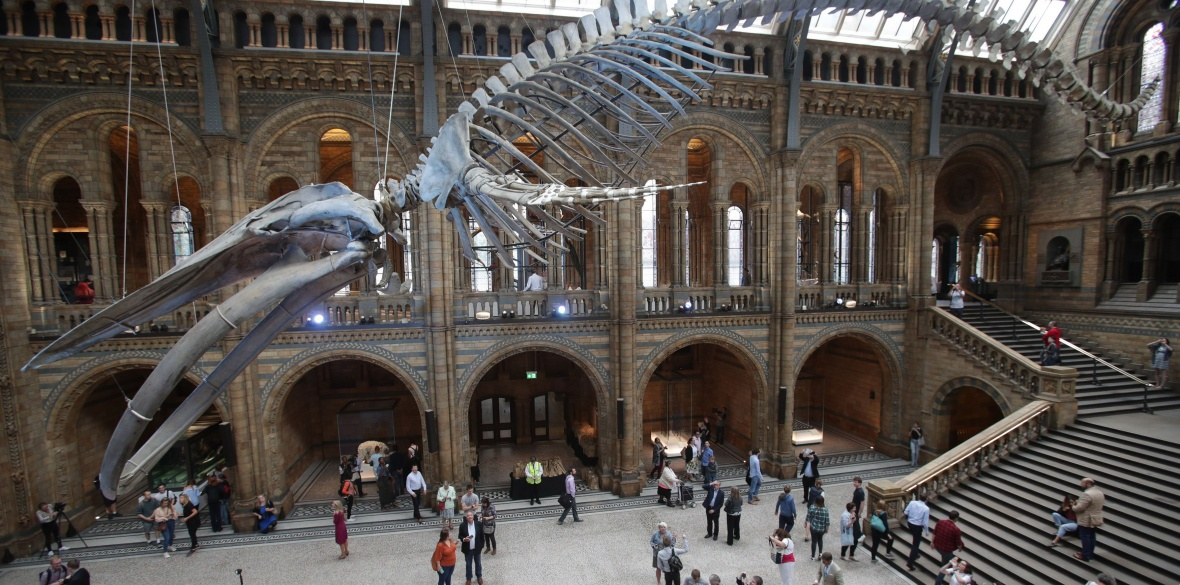The entrance hall of the Natural History Museum in London, with a whale skeleton