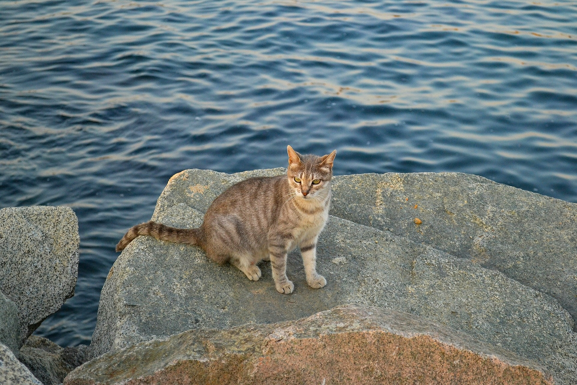 Feral cats are surprisingly common